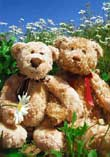 Buddy & Bear: Playing With Daisies