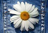A Daisy In My Pocket